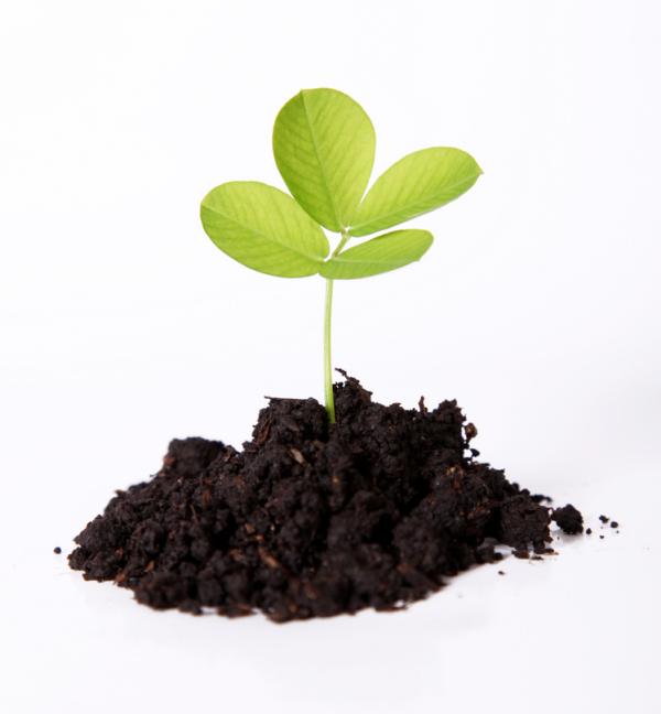 Rising Above Organic Growth