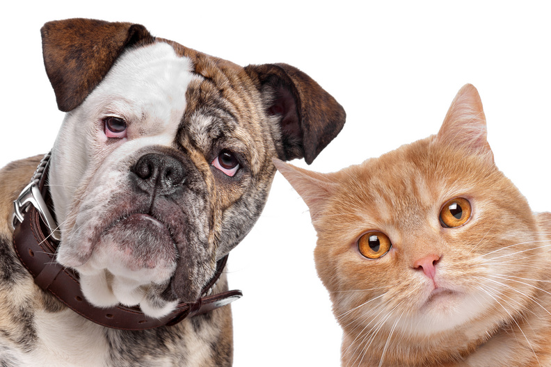 Can Dogs Become Cats - Chief Outsiders UT Research on CEO and Mid-Market Growth