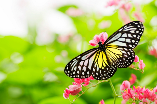 The need and nature of  transforming an organization.
