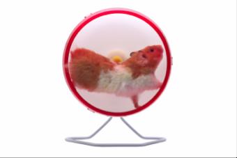 hamster wheel resized 600