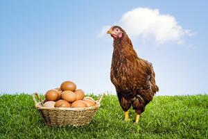 chicken-or-the-egg