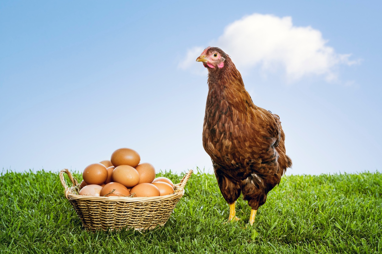 Sales vs. Marketing: Chicken or Egg First?